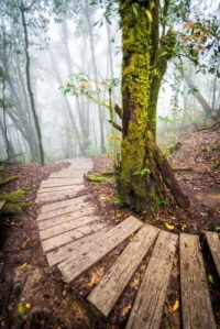 Pathway In Forest Of Thailand